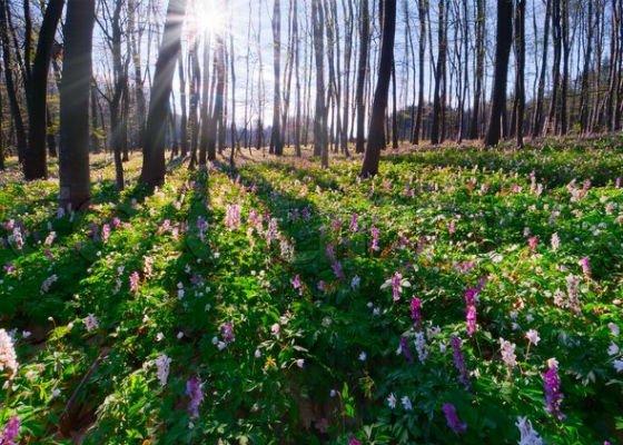Börzsönyi tavaszköszöntő hétköznapok
